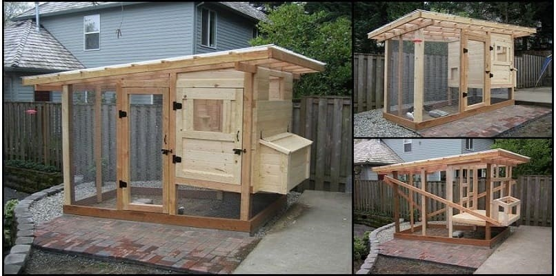 Building A Chicken Coop