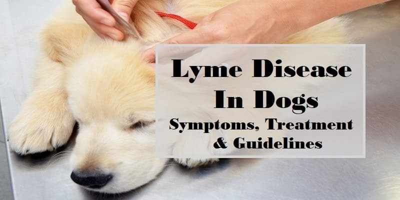 Lyme Disease in Dogs: Symptoms, Testing, Treatment, and
