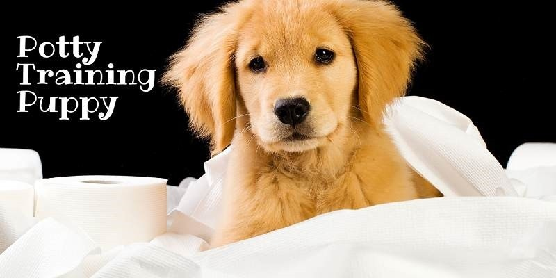 How To Potty Train Puppies