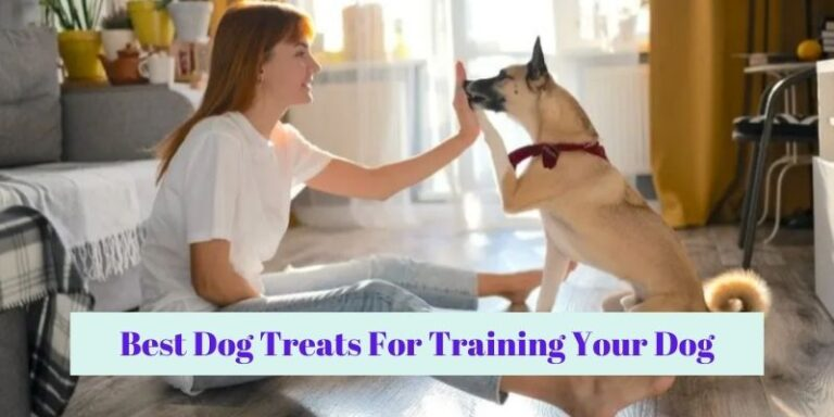 Best Dog Treats For Training Your Dog