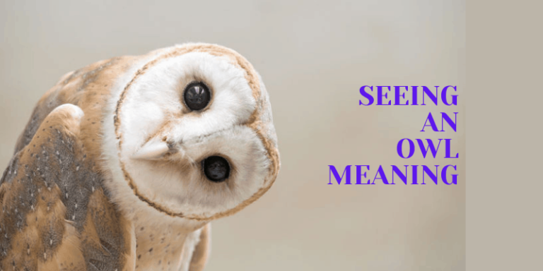 Seeing an Owl Meaning