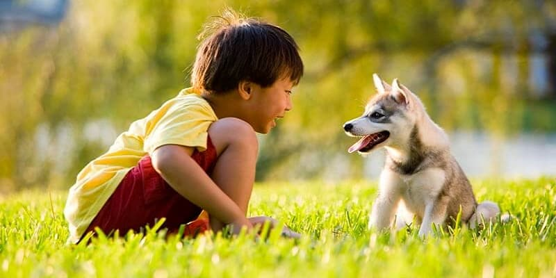 Small Dogs That Are Good With Kids