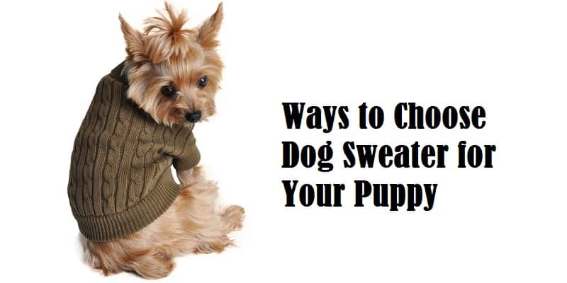 Ways to Choose Dog Sweater for Your Puppy