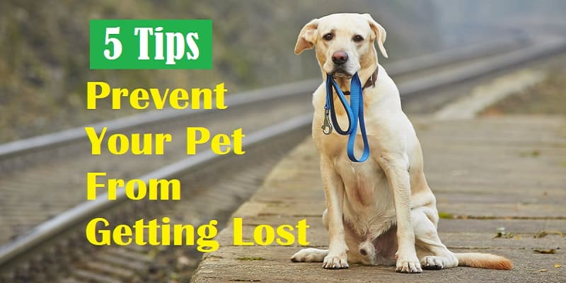 Prevent Your Pet From Getting Lost